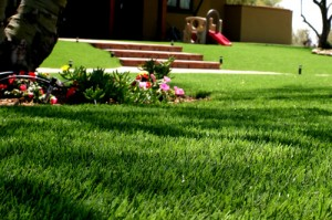 Artificial Lawn Turf