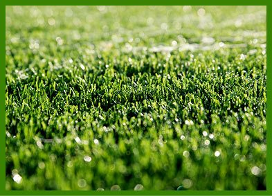 Artificial Turf, Artificial Grass, Synthetic Turf, Synthetic Grass, Artificial Lawn Turf