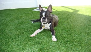 artificial grass synthetic turf dog grass