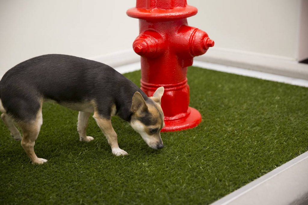 Artificial Pet Grass Potty Stations At Las Vegas McCarran Airport
