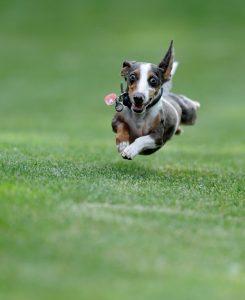 Artificial Pet Grass, Artificial Pet Turf, Artificial Dog Turf