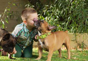 Artificial Pet Turf - Artificial Pet Grass - Artificial Dog Grass