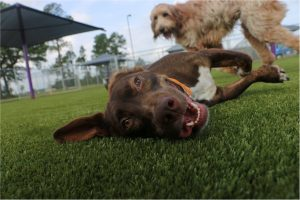 Artificial Pet Turf, Artificial Pet Grass. Artificial Dog Turf